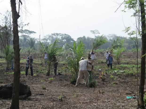 Les travailleurs plantent des palmiers à quelques mètres seulement d'une maison campesina, violant la délimitation instaurée le jour d'avant ©Judith Bovard/2015