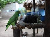 Colombie_Le Magdalena Medio est une région très tropicaleColombie_Déplacement des observateurs en chaloupe©PWS2013