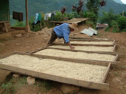 Guatemala_Séchage des fèves©PWS2005